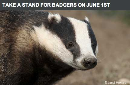 Take-a-stand-for-badgers